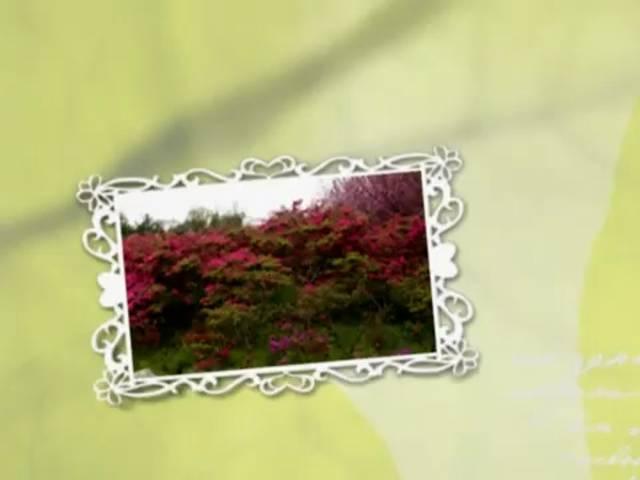 투구봉 연산홍